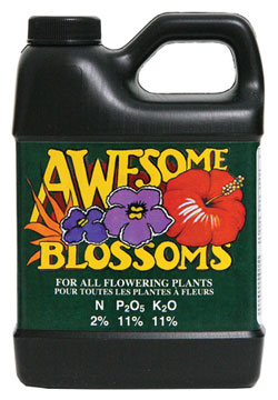 Awesome Blossom (2-11-11) - 500 mL